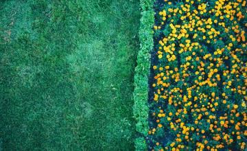 Pollini e verde urbano: le azioni salutari
